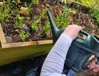 A resident gardening